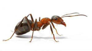 karınca ilaçlama