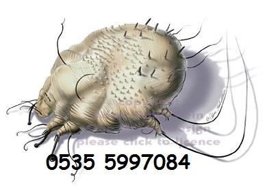Uyuz Böceği İlaçlama Servisi şirketi