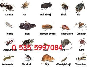 izmir edremit manisa böcek ev ilaçlama şirketi