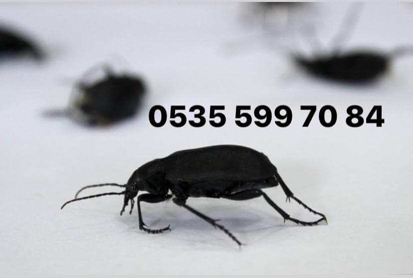 menemen ev böcek haşere ilaçlama şirketi servisi