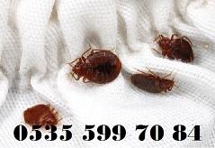 tahta kurusu böcek haşere ilaçlama şirketi