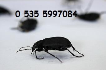menemen ev böcek haşere fare ilaçlama şirketi